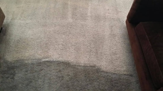 wall to wall carpet cleaning before&after